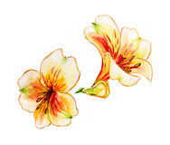 Spring flowers Watercolor painting. Royalty Free Stock Images