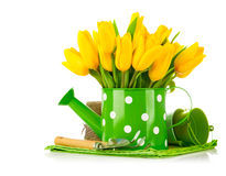Spring flowers in watering can with garden tools Royalty Free Stock Image