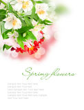 Spring flowers  on a white Royalty Free Stock Image