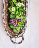 Spring flowers in white basket on old wooden background Royalty Free Stock Photo