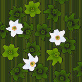 Spring flowers white narcissuses Stock Photo