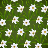 Spring flowers white narcissuses Stock Image