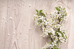 Spring flowers on white wooden background Stock Images