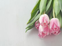 Spring flowers. White wooden background with five gentle tulips. Stock Photo
