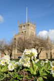Spring flowers with Wigan Parish Church background. Royalty Free Stock Photo