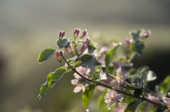 Spring flowers on a wild Bush close-up stock image