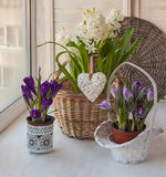 Spring flowers in the window Royalty Free Stock Photography