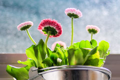 Spring flowers in window. Royalty Free Stock Images
