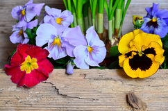 Spring flowers wood background Royalty Free Stock Images