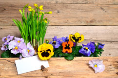 Spring flowers wood background stock images