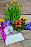 Spring flowers wood background Stock Photo