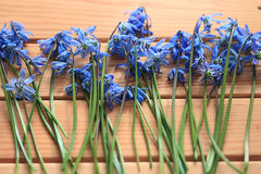 Spring flowers on a wooden backgroun Stock Images