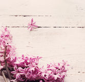 Spring flowers on wooden background Royalty Free Stock Images