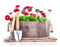 Spring flowers in wooden basket with garden tools Stock Photos