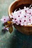 Spring flowers in wooden bowl Royalty Free Stock Image