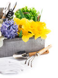 Spring flowers in wooden box with garden tools Royalty Free Stock Photography