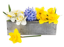 Spring flowers in wooden box Royalty Free Stock Images