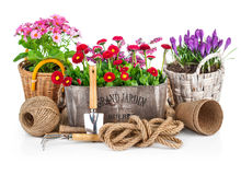 Spring flowers in wooden bucket with garden tools Royalty Free Stock Images