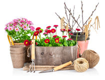 Spring flowers in wooden bucket with garden tools Stock Image