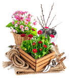 Spring flowers in wooden bucket with garden tools Stock Photos
