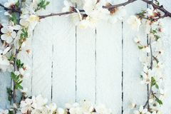 Spring flowers on wooden table stock photos