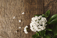 Spring flowers on a wooden table Royalty Free Stock Images