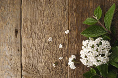 Spring flowers on a wooden table Stock Images