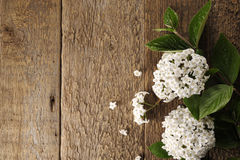 Spring flowers on a wooden table Stock Photo