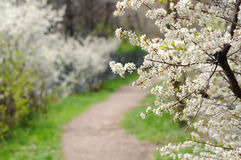 Spring Path Stock Photography
