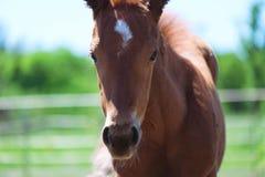 Free Spring Foal Horse Stock Photos - 176586673