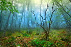 Spring. Fog. Spring forest in Crimea Stock Image