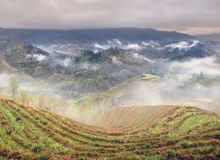 Spring fog in mountains of southwestern China, rice terraces, fa Stock Image