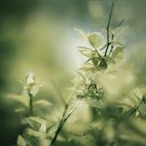 Spring foliage Stock Image