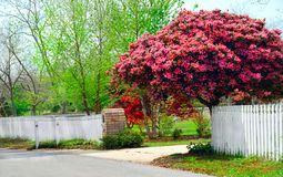 Spring foliage Royalty Free Stock Photography