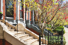 Spring Foliage in Back Bay Royalty Free Stock Images