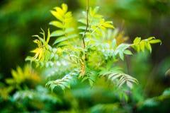 Spring foliage background Stock Images
