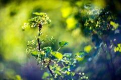 Spring foliage background Stock Photography