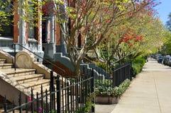 Spring Foliage in Boston Back Bay Stock Image