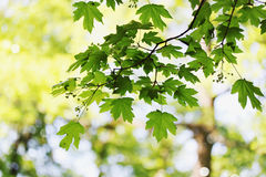 Spring foliage Stock Photos