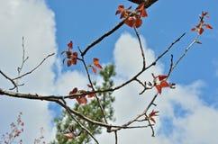 Spring foliage 9 Royalty Free Stock Image