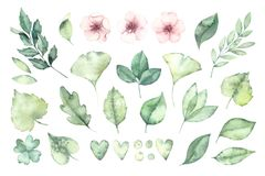 Spring foliage. Watercolor illustration. Botanical collection of. Green leaves, branches and herbs. Perfect for wedding invitations, greeting cards, posters vector illustration