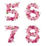 Spring font from cherry flowers figures 5,6,7,8 Royalty Free Stock Images