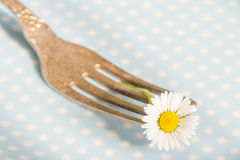 Spring food abstract background with daisy on the fork Stock Image