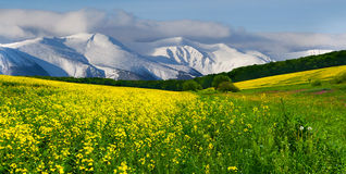Spring in the foothills. Blooming field of yellow flowers stock photo