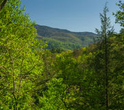 Spring, Foothills Parkway Stock Photography