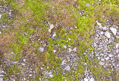 Spring Fores Moss in the Sunshine. Green Nature Lichen Background Stock Photo