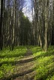 Spring forest. Path Stock Image