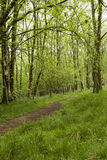 Spring forest Stock Image