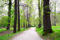 Spring forest Royalty Free Stock Photo