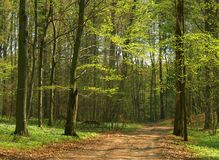 Spring forest Royalty Free Stock Photos